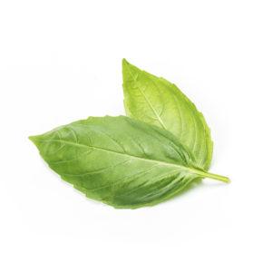 Basilikum Blätter gesund
